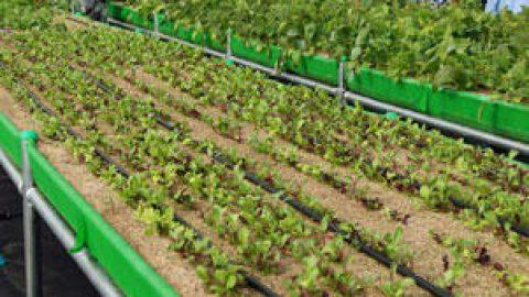 目的のための農業と手段としての農業